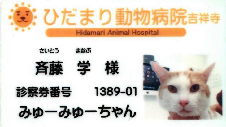 みゅーみゅーちゃん、動物病院へ行く