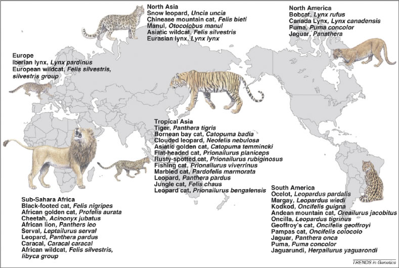 8系統37種のネコ科動物