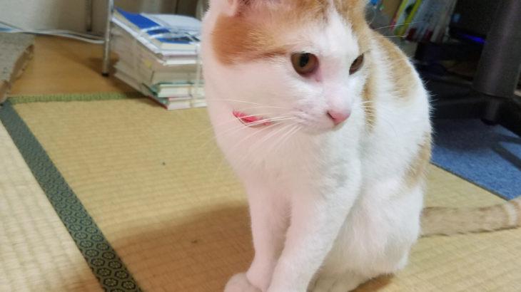管理人と猫の食事