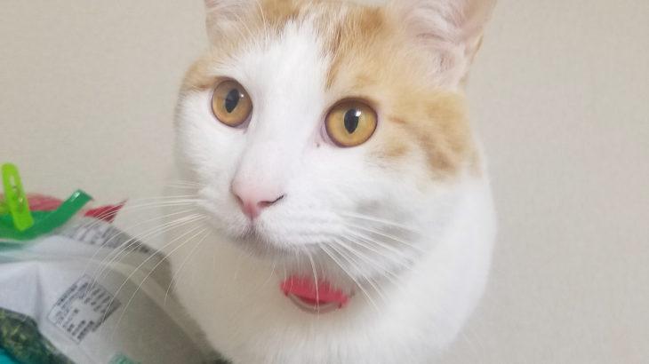 猫の瞳や特徴