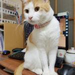 猫とPCケース 76台目