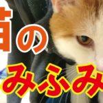 【動画】猫のふみふみ