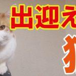 【動画】出迎える猫