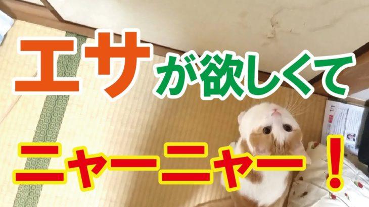 【動画】エサが欲しくてニャーニャー