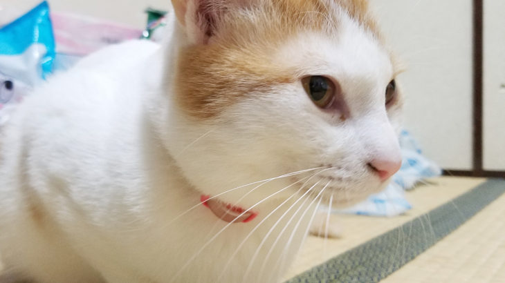 猫は眠いと鼻が乾く