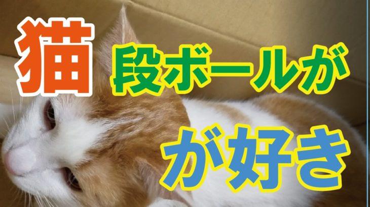【猫と段ボール】みゅーみゅーちゃんがじゃれる動画