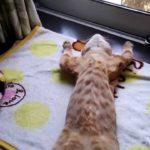 同居人はひざ、時々、頭のうえ。 捨て猫3匹目