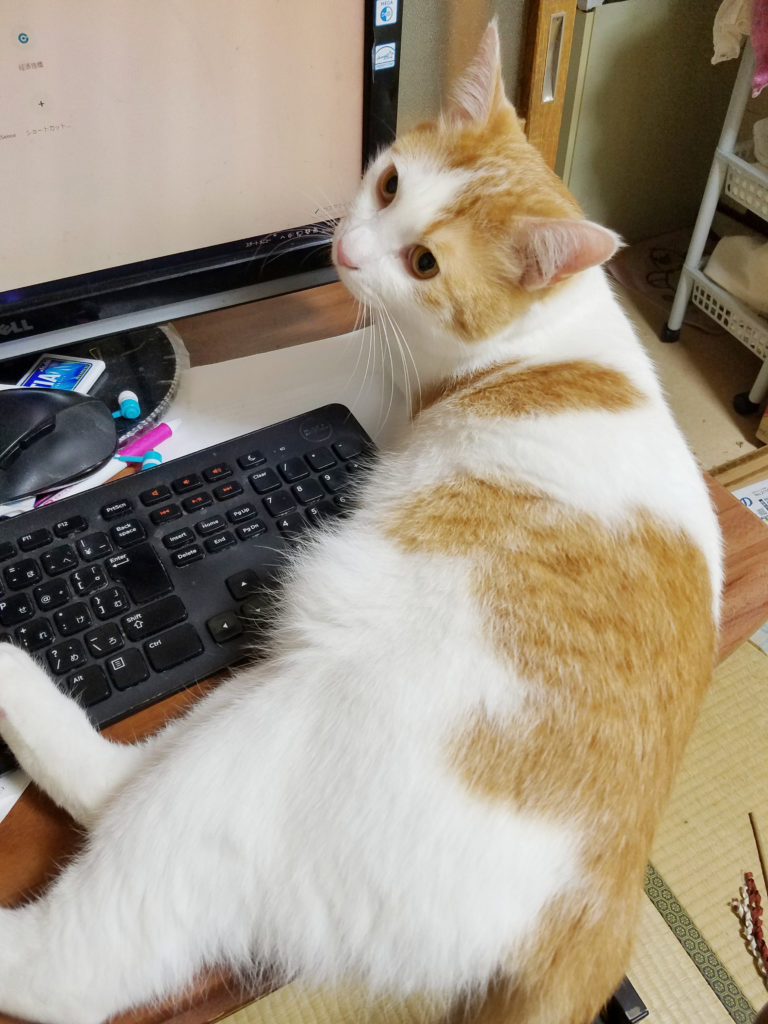 猫のみゅーみゅー、こちらを気にしています