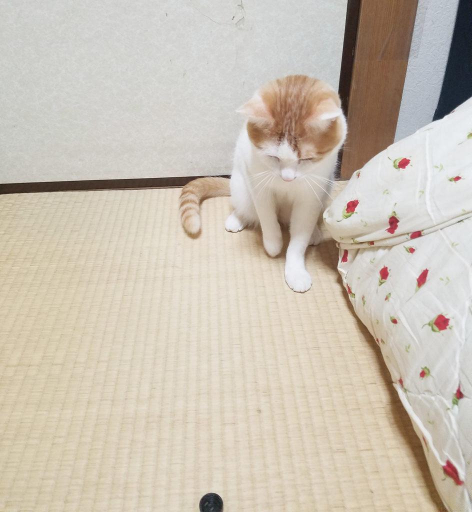 じゃれる猫のみゅーみゅー2