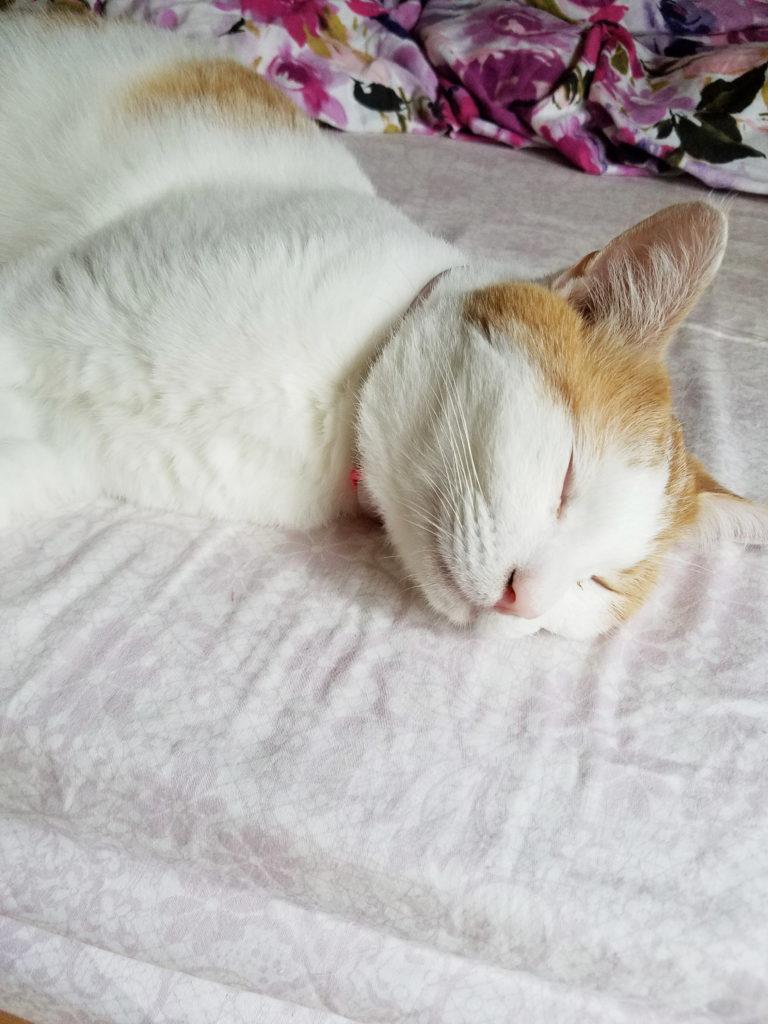 やっぱり眠い猫のみゅーみゅー