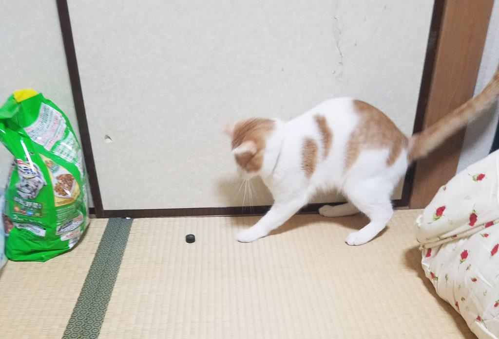 ねじにじゃれる猫のみゅーみゅー