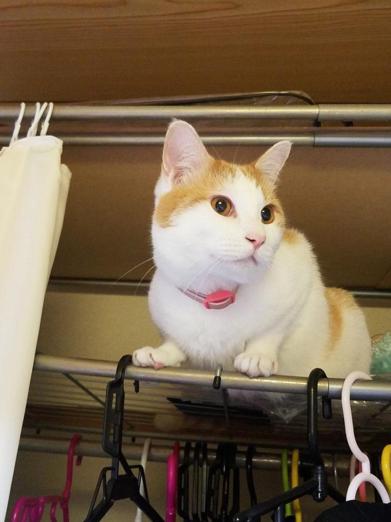 高いところに登った猫のみゅーみゅー
