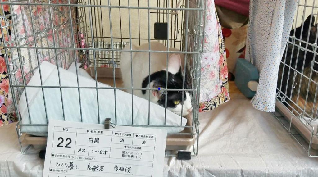 吉祥寺で行われた猫の譲渡会