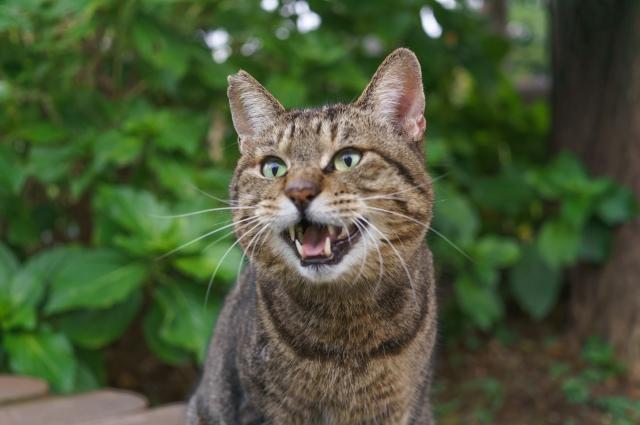 地域猫活動とは