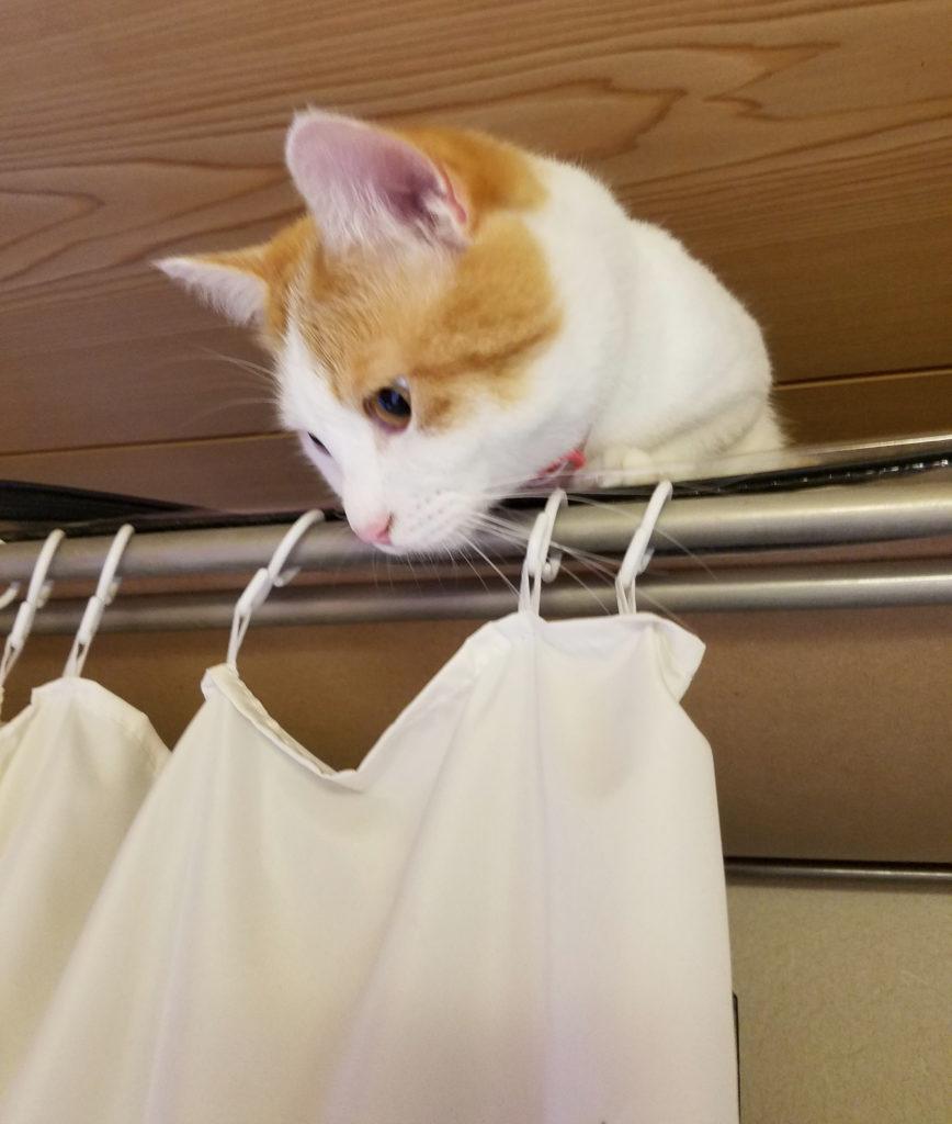 ジャンプして一段高の猫のみゅーみゅー