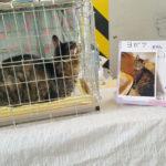 【猫の譲渡会】むさしの地域猫の会(吉祥寺)