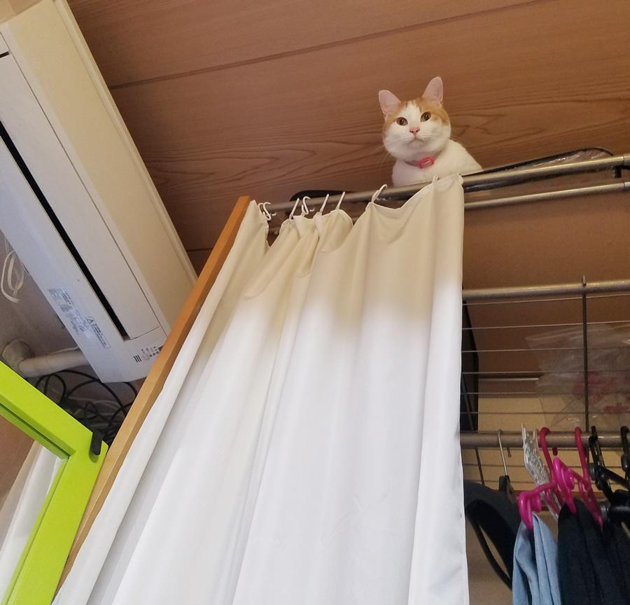 天井付近まで上昇した猫のみゅーみゅー