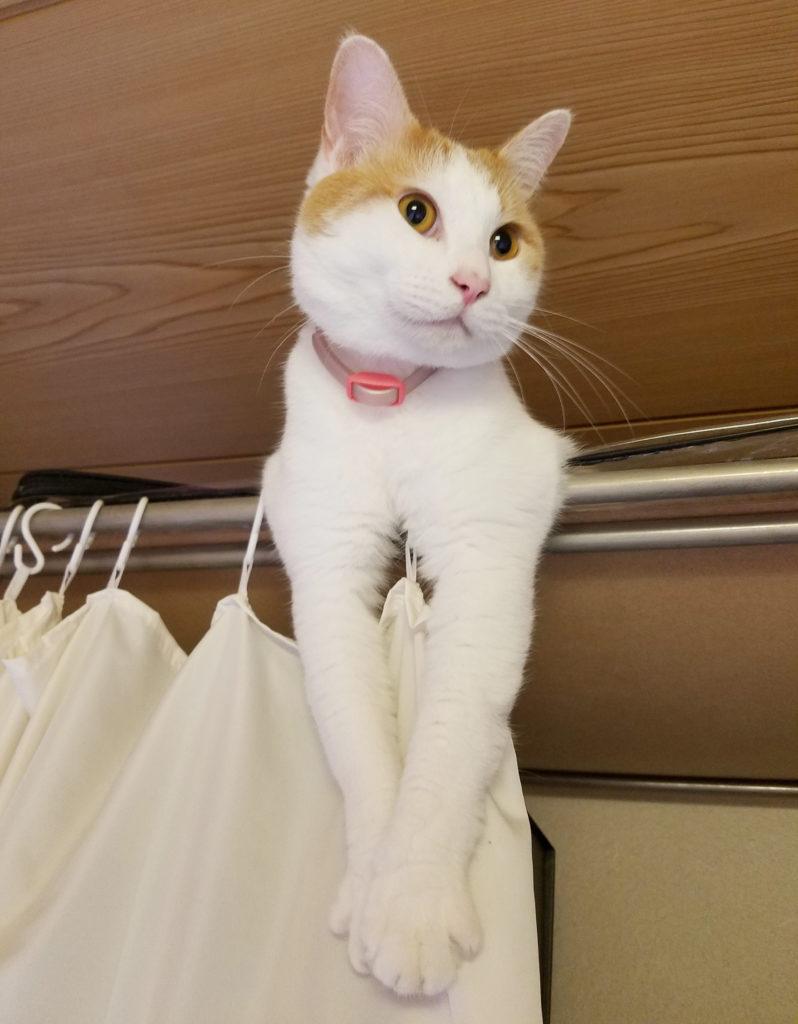 前足を伸ばしてリラックスする猫のみゅーみゅー
