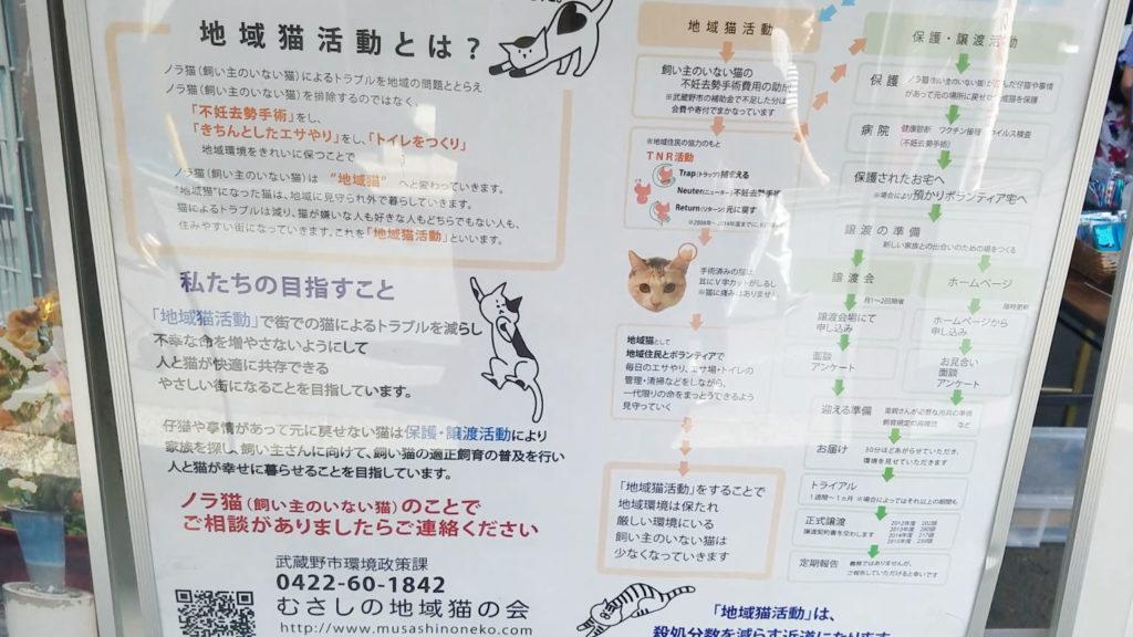 地域猫活動とは?