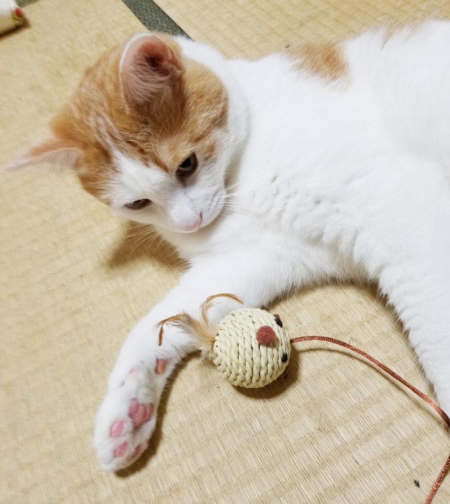 猫のおもちゃと一緒に寝る猫のみゅーみゅー