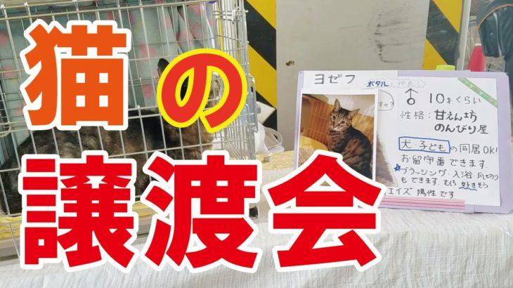 【動画】猫の譲渡会