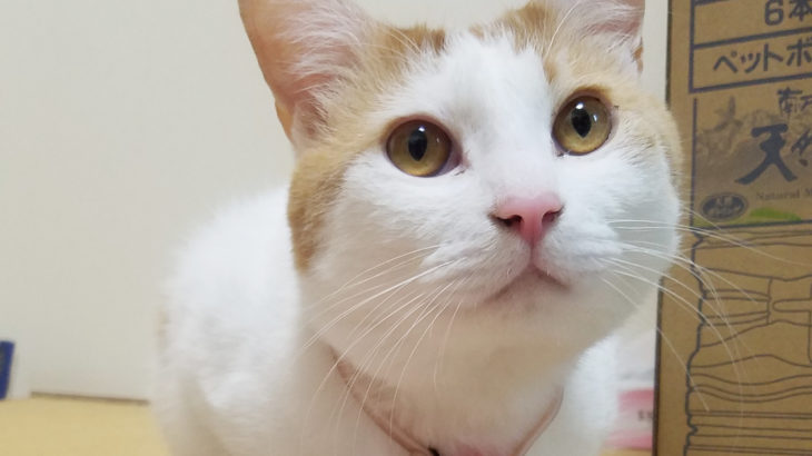 CIAOちゅーるの成分と猫